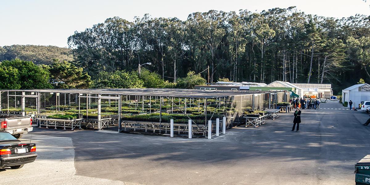 Presidio Native Plant Nursery