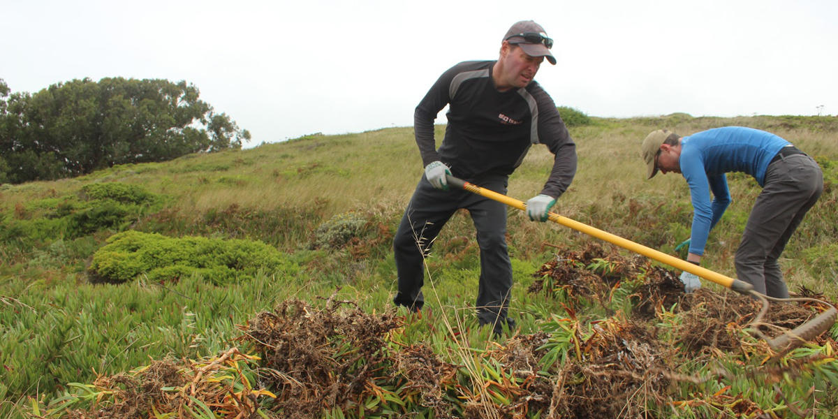 volunteers restore natural habitat using tools