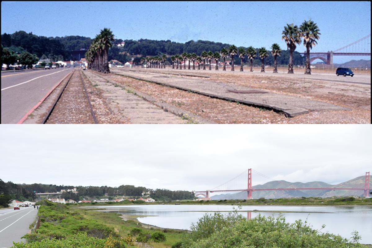 Crissy Field before and after restoration