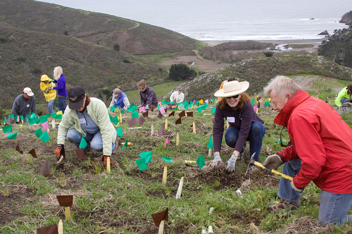 Volunteers planting at Dias Ridge