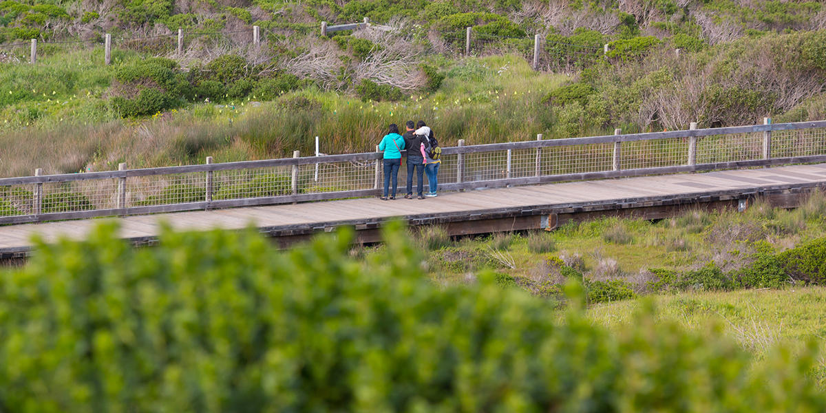 Hiking at Mori Point