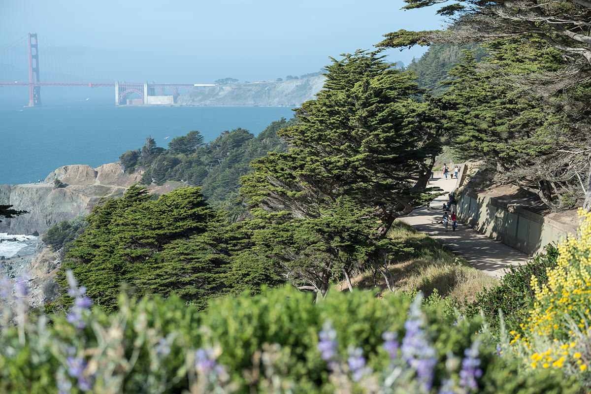 Coastal Trail at Lands End