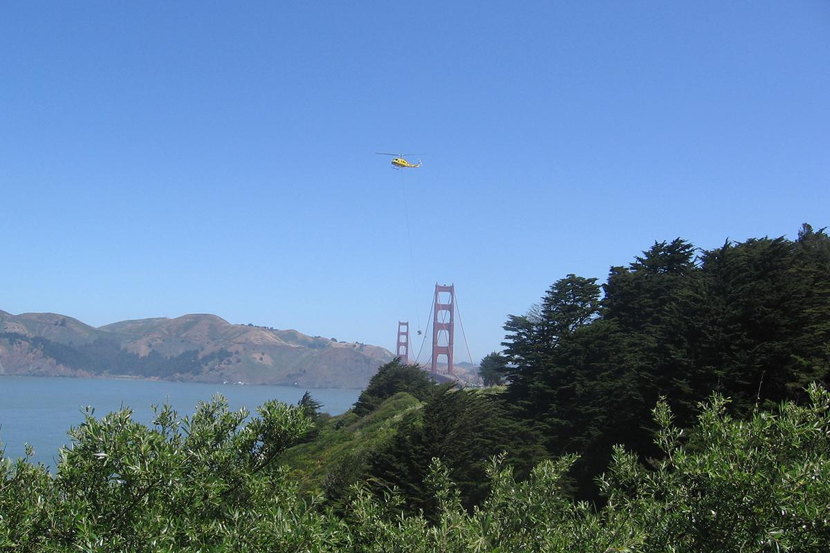 Helicopter removing trees at the Presidio bluffs