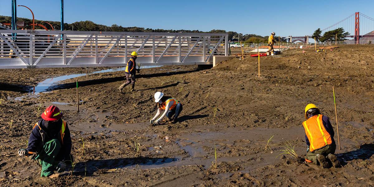 Planting at Quartermaster Reach wetlands