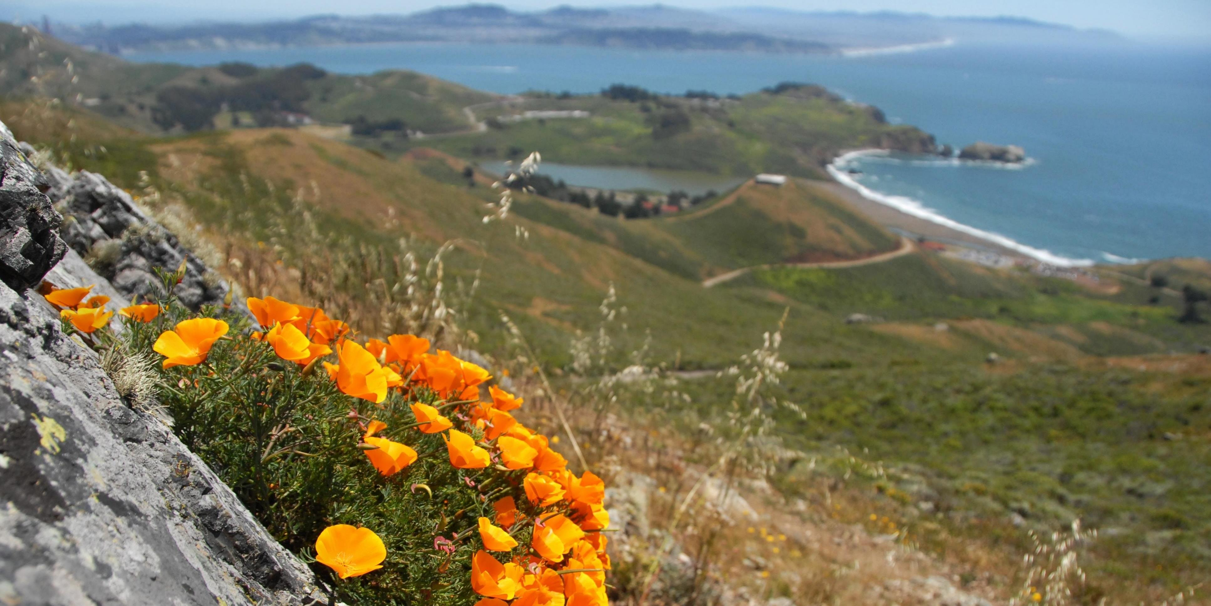 Poppies overlooking Fort Cronkhite and Rodeo Beach