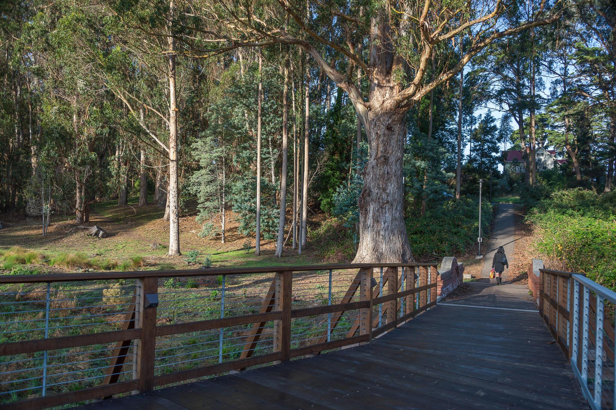 Visitor Strolling Through MacArthur Meadow