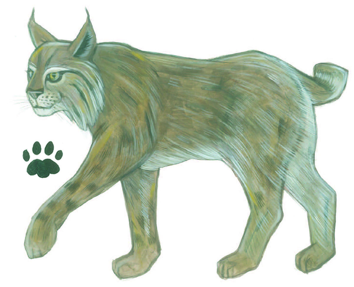 Bobcat illustration by Grey Arena.