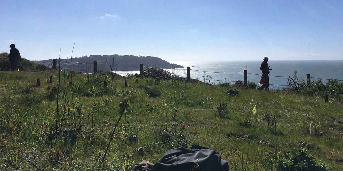 Volunteers restore a natural habitat overlooking the Pacific Ocean
