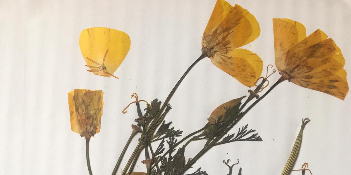 Alcatraz Gardens Class Series: Herbarium and Plant Pressing