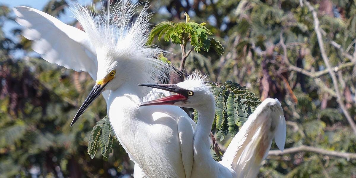 Alcatraz Waterbirds Tour