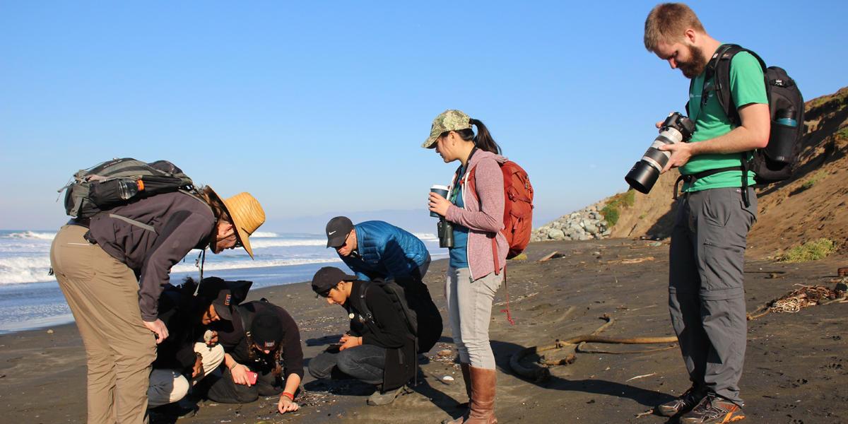 Lands End Coastal Walk with San Francisco Park Stewardship