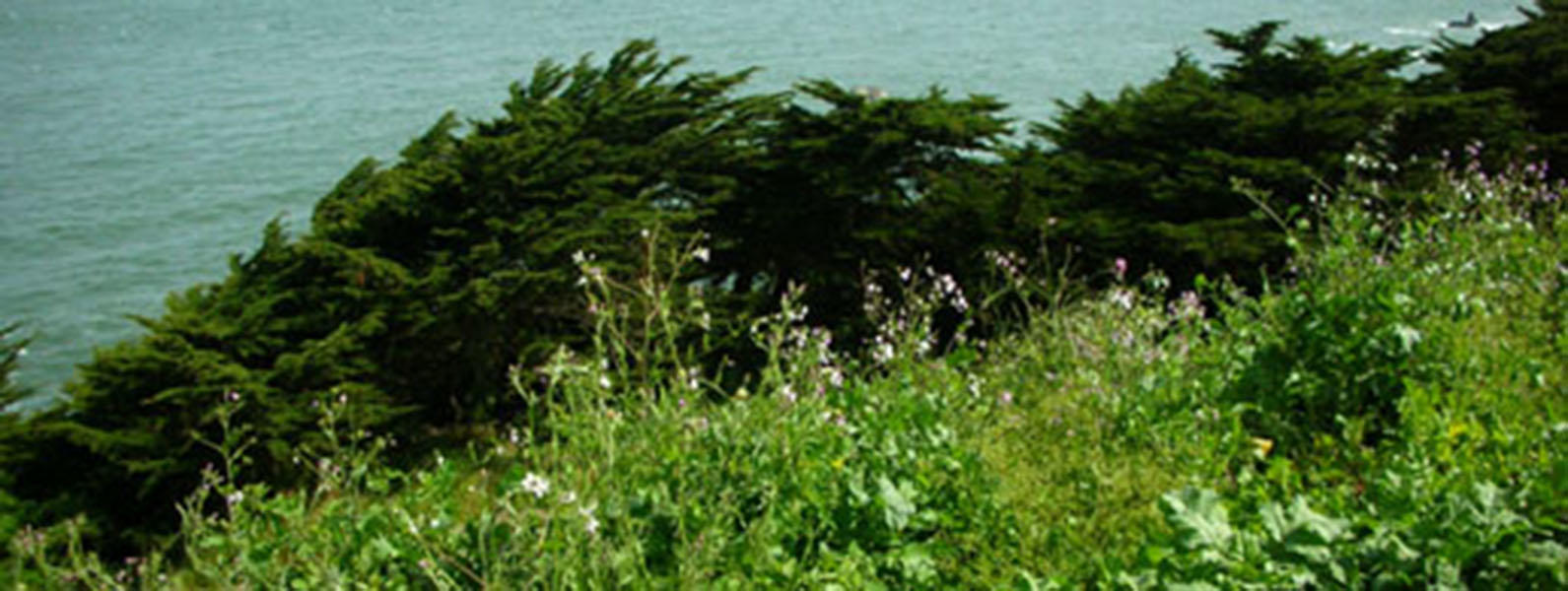 Why and How We Control Invasives in the Park Workshop