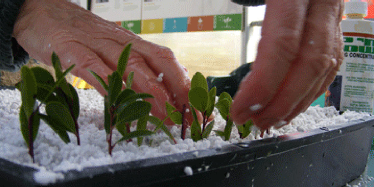 Growing Plants from Cuttings, Nursery Series, Park Academy