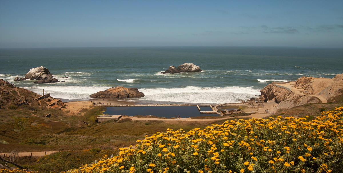 Image of wildflowers at Lands End