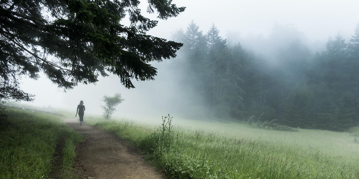Foggy trail on Mt. Tam