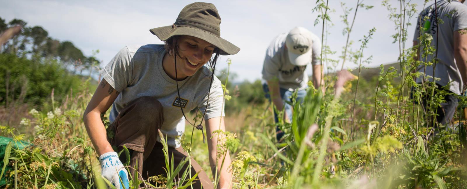 Stewardship Intern at Work