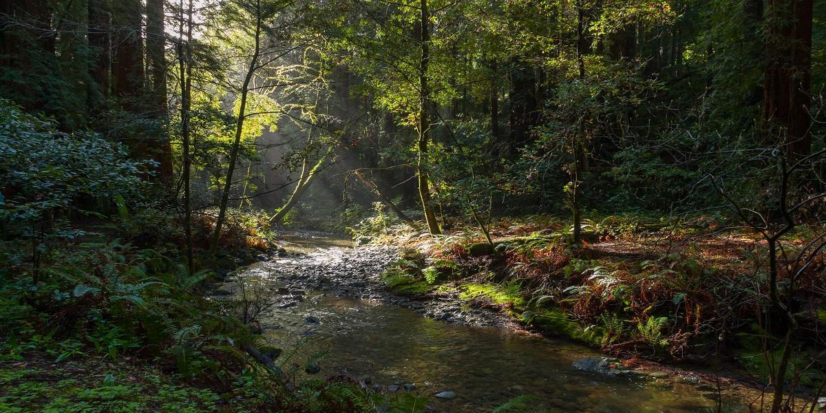 Image of Redwood Creek in Muir Woods