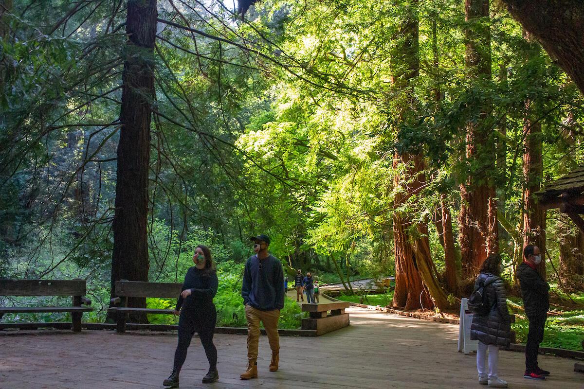 Masked visitors walking through Muir Woods.