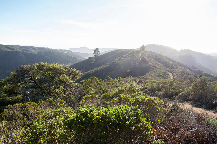 A trail at Rancho Corral de Tierra in San Mateo County.