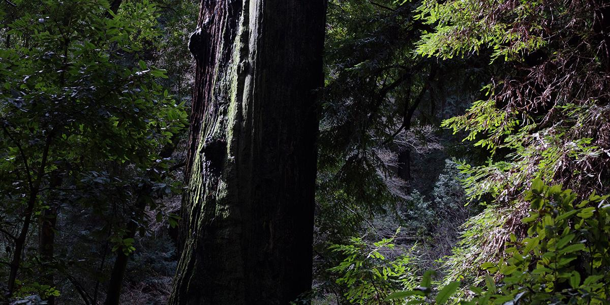 March Sunrise Tour Of Muir Woods Golden Gate National Parks