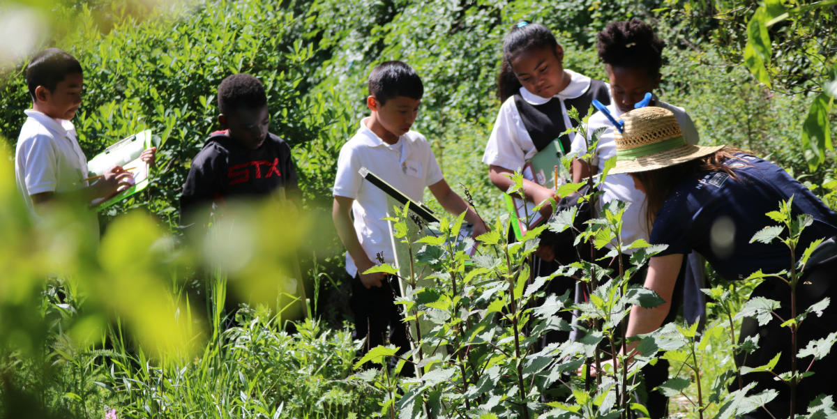 Students examine native plants in the demonstration garden.