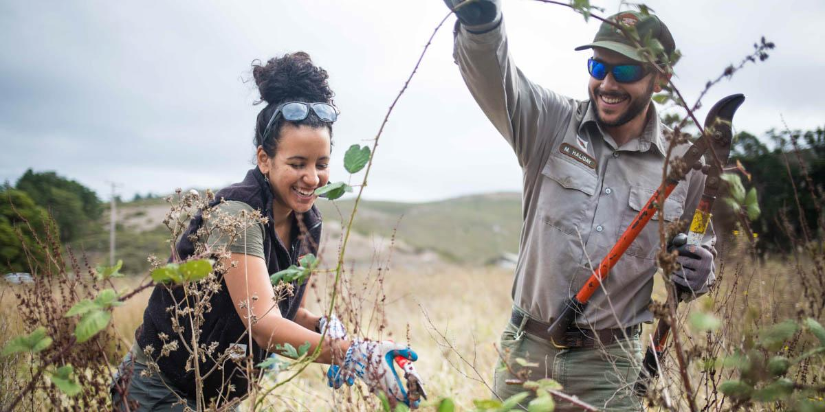 Removing Invasives in Tennessee Valley