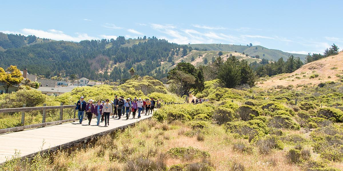 An elevated wooden deck trail was constructed to maintain visitor access while protecting wetlands and providing safe passage for wildlife at Mori Point