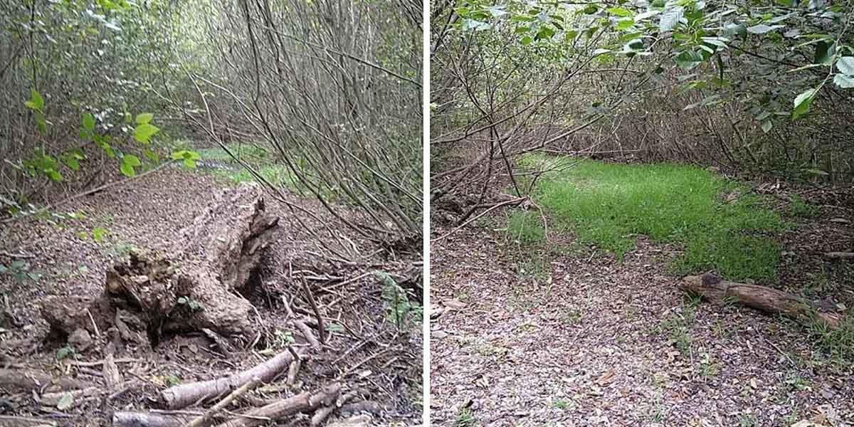 A side by side comparison showing Redwood Creek before restoration efforts.