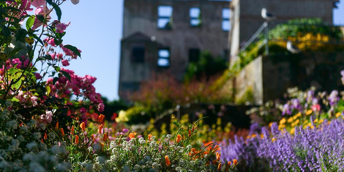 Flowers at the Alcatraz Gardens