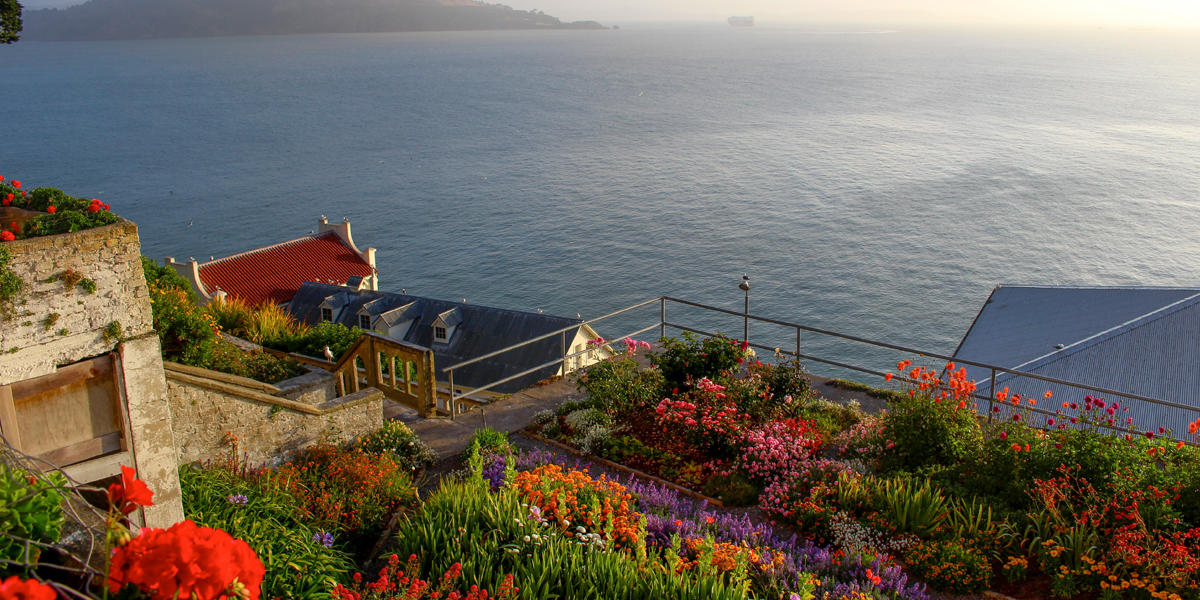 Alcatraz gardens and view from the island