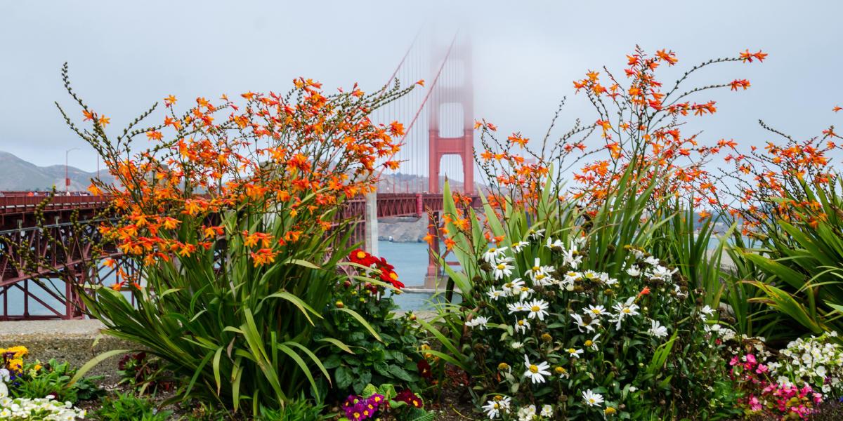 Flora juxtaposed with the bridge