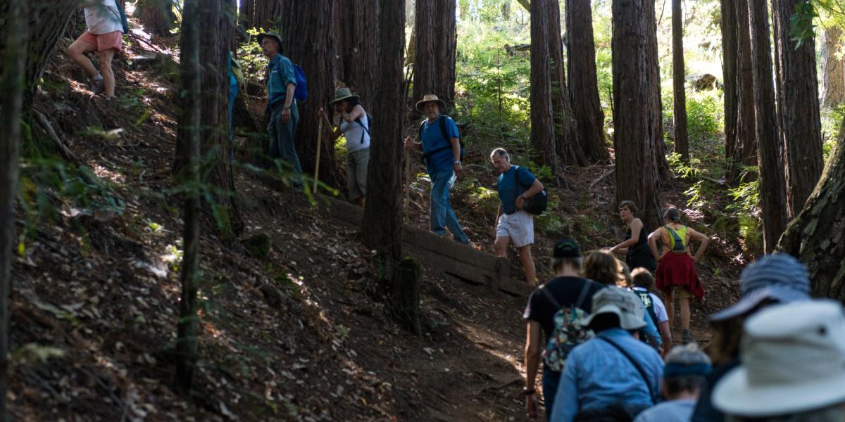 Forest bathing while hiking