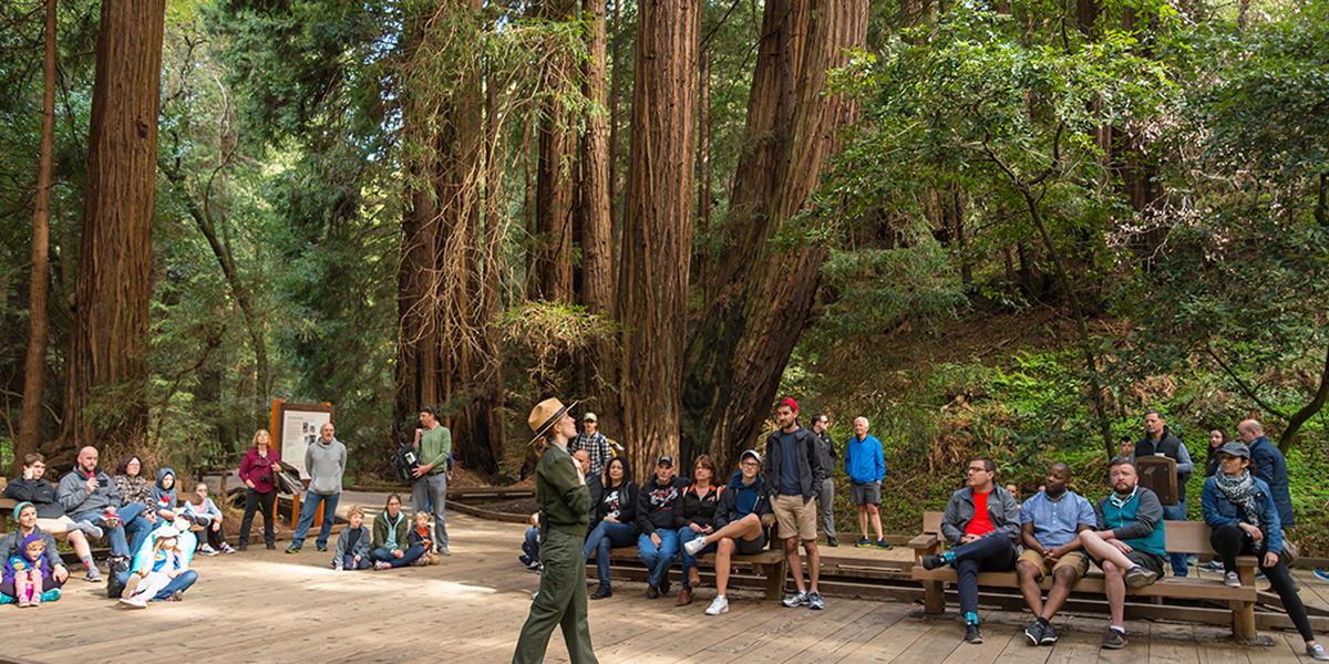 Muir Woods Tours Redwoods
