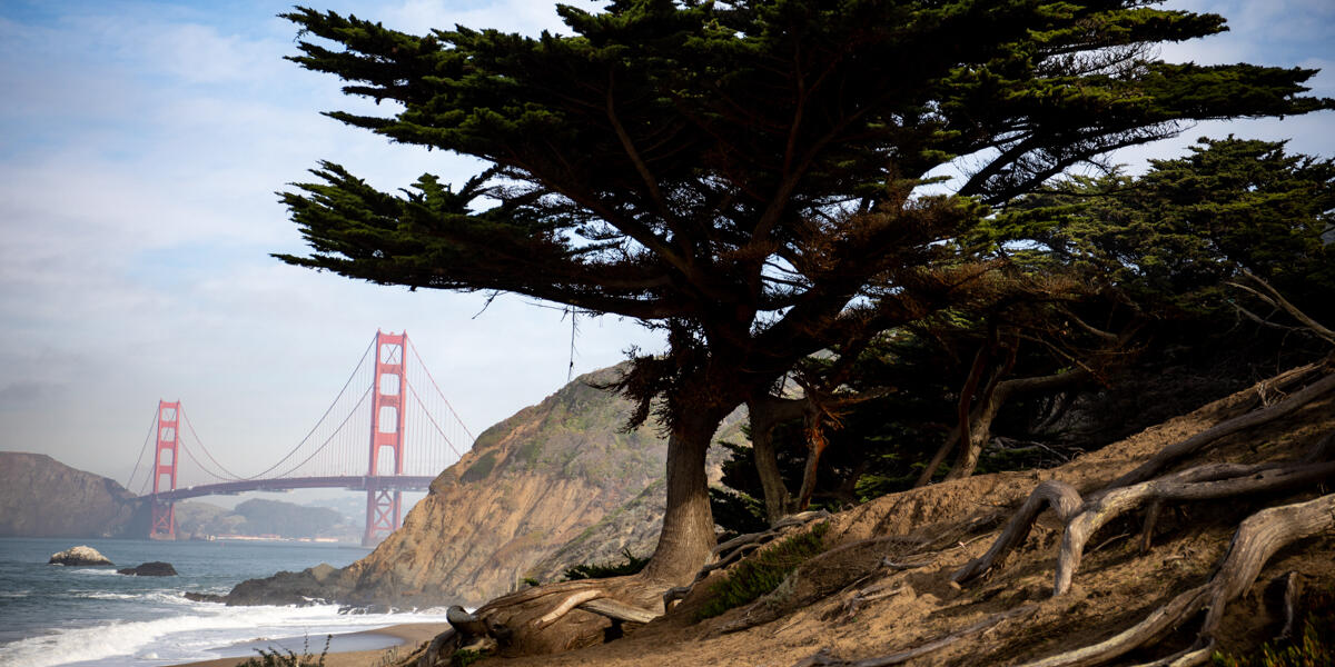 A view of the Golden Gate Bridge from Baker Beach. A giant tree towers over the scene.