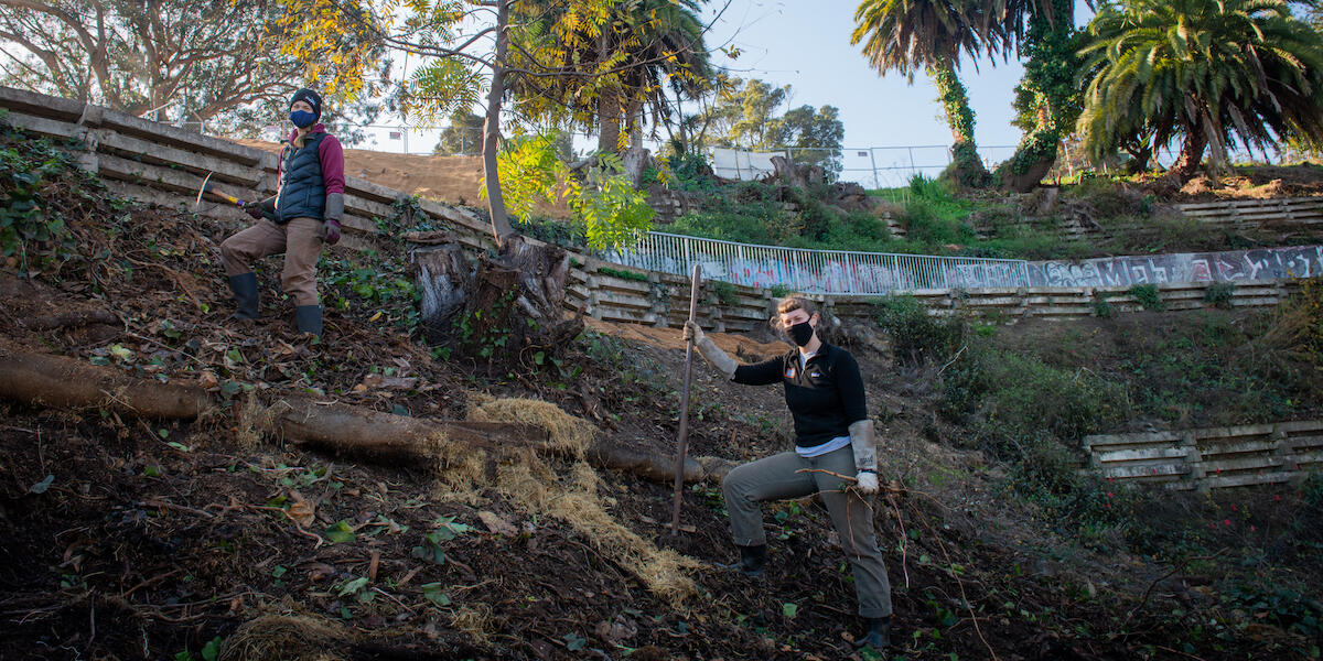 Parks Conservancy staff working to restore the Black Point Historical Garden at Fort Mason.