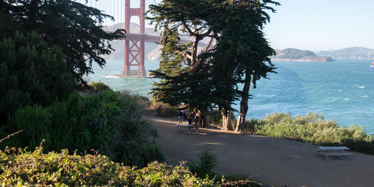 Golden Gate Bridge through the trees