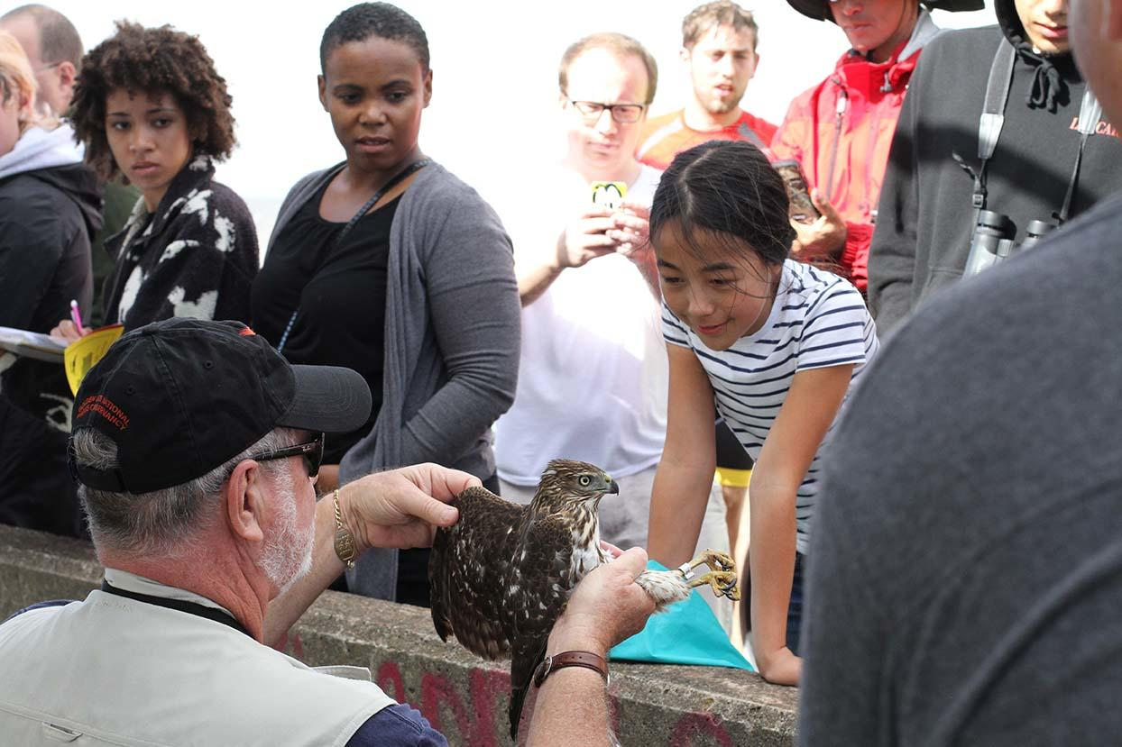Park visitors admire a juvenile Cooper's Hawk during a Hawk Talk at Hawk Hill.
