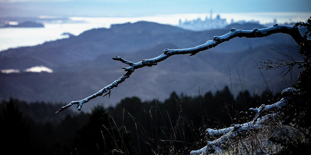 snow on branches with San Francisco in background