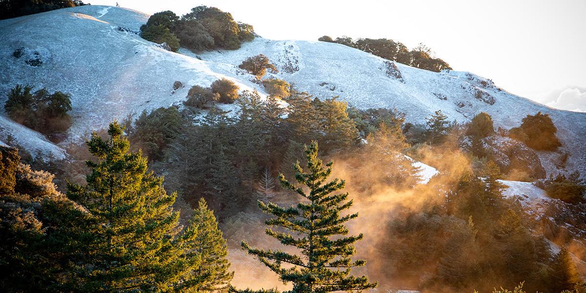Snow and mist on Mount Tam