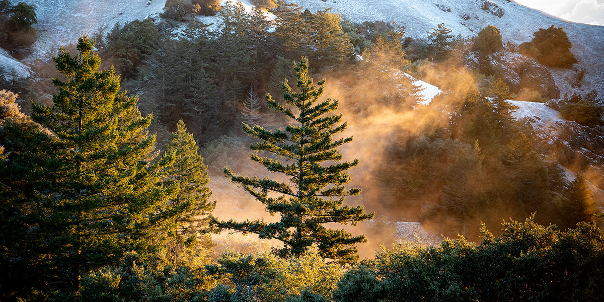 A tree glows in the sunlight with a snow-covered Mt. Tam in the background.