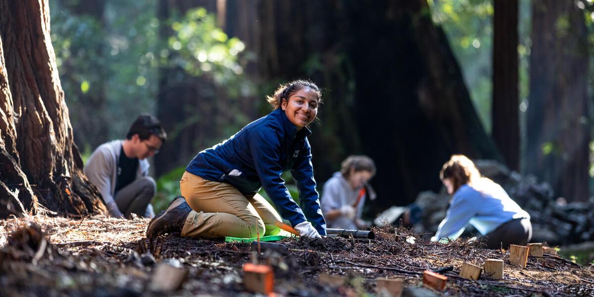 One Tam staff and volunteers doing stewardship work in Muir Woods.