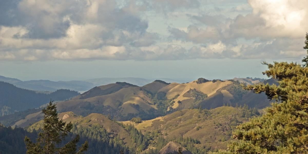 View from the Northside Trail on Mt. Tam