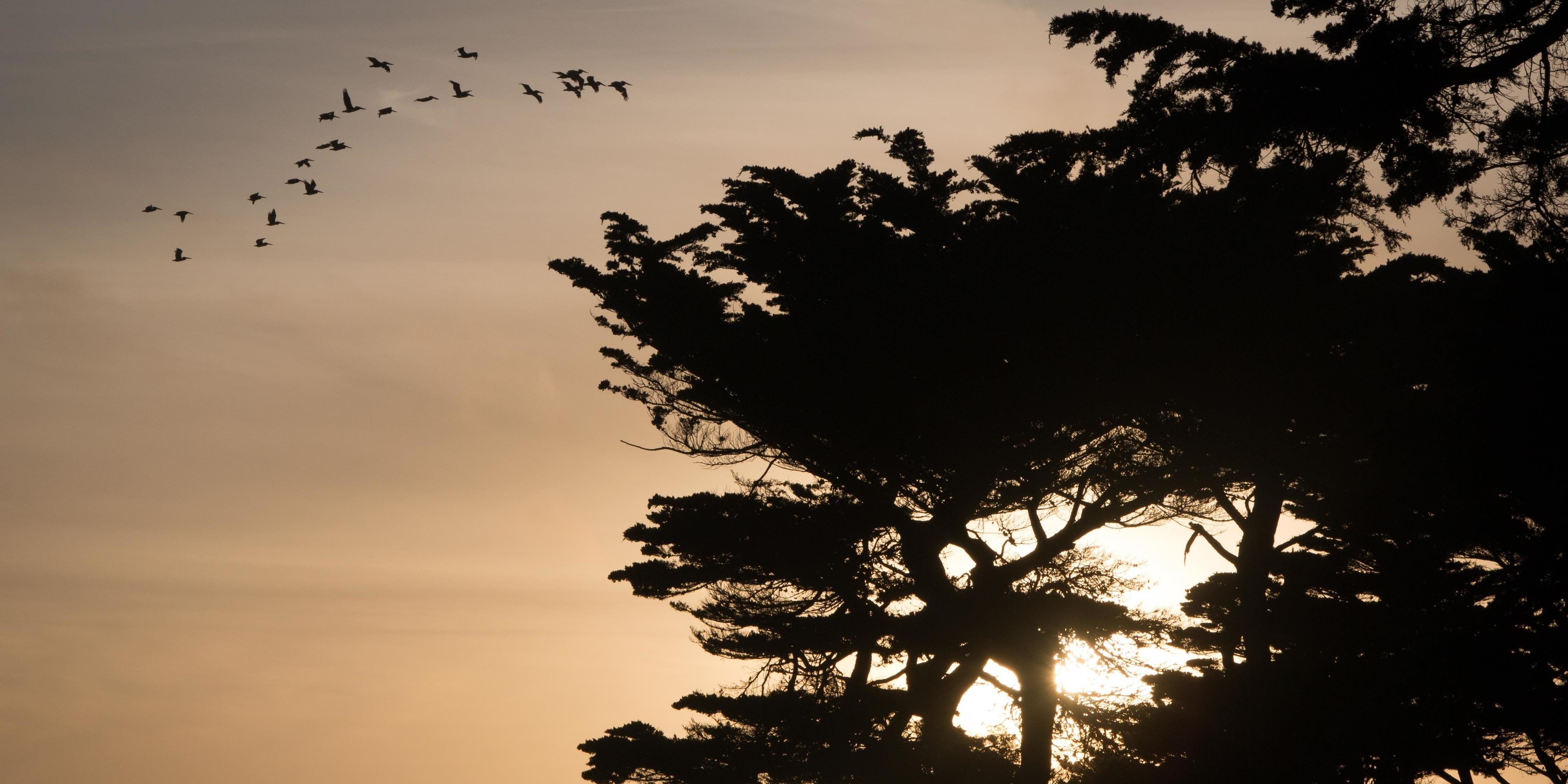 Sunset through the cypress at Lands End
