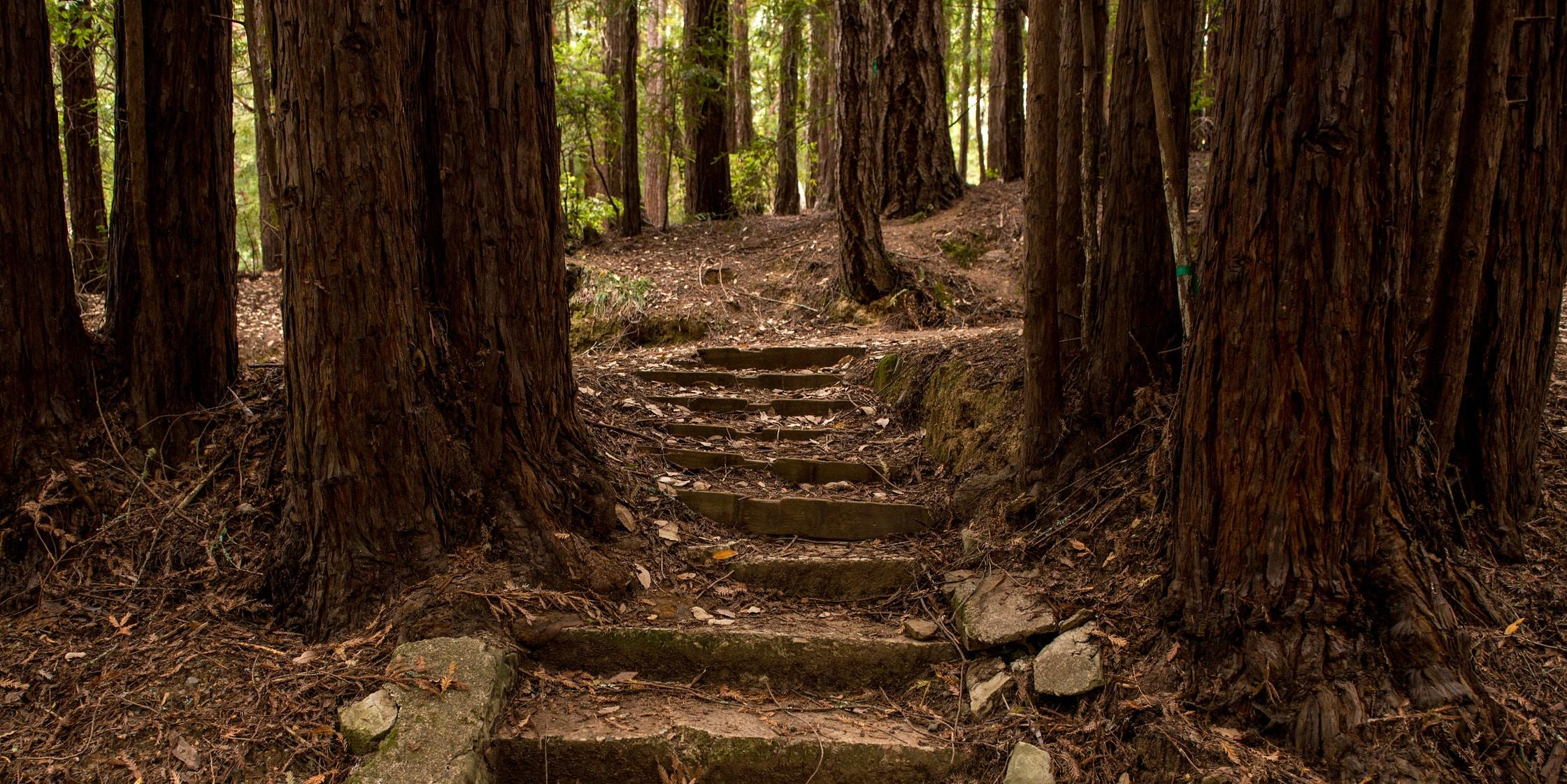 Pathway steps at Camp Alice Eastwood