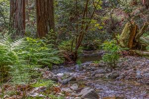 Redwood Creek in Muir Woods