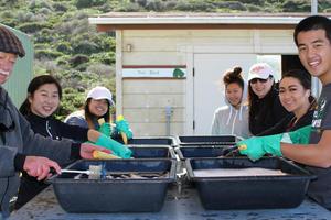 Volunteers wash pots at the Fort Funston Nursery
