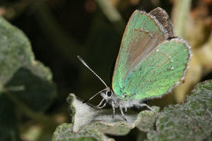 a colorful winged insect stands on a bright green plant