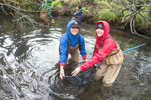Parks Conservancy staff help release coho salmon at Redwood Creek
