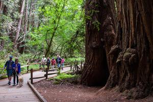 Muir Woods boardwalk