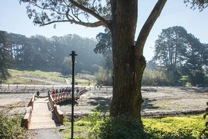 "New ""boardwalk"" above the restored wetland"